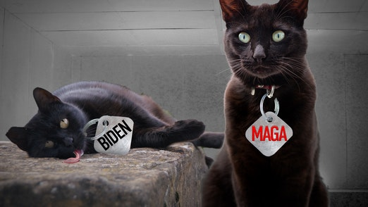 Ep. 653 - Schrödinger's POTUS (And Joe Biden's Cat)